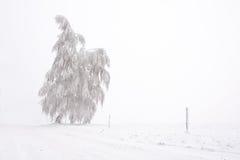 Eenzame sneeuw en berijpte boom op de vlakte stock foto