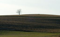 Eenzame solitaire boom op gebied op horizon Royalty-vrije Stock Afbeelding