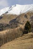 Eenzame spar in open plek onder sneeuw rotsachtige hellingen van Grem-piek, het Royalty-vrije Stock Foto's