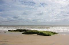 Eenzame strandrotsen met zeewier Stock Foto's