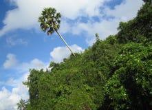 Eenzame tropische boom Royalty-vrije Stock Foto's