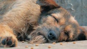 Eenzame verdwaalde hond die op de vloer in schuilplaats liggen, die aan het hongerige miserabele leven, dakloosheid lijden Schuil stock video