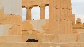 Eenzame verdwaalde hondslaap op marmeren treden van oude bouw met kolommen stock footage