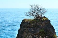 Eenzame vernietigde boom op rotsbovenkant dichtbij de zomeroverzees Stock Afbeelding