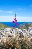 Eenzame violette bergbloem tegen het overzees en de blauwe hemel Royalty-vrije Stock Afbeelding
