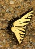 Eenzame Vlinder Royalty-vrije Stock Fotografie