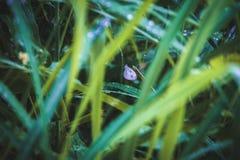 Eenzame vlinder op nat gras stock foto's