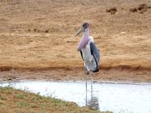 Eenzame vogel Stock Afbeelding