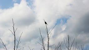 Eenzame vogel Royalty-vrije Stock Afbeeldingen