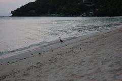 Eenzame vogel op het Strand royalty-vrije stock foto's