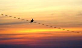 Eenzame vogel op zonsondergang royalty-vrije stock foto's