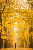 Eenzame vrouw die in park op een mistige de herfstdag lopen Eenzame vrouw die aard van landschap in de herfst genieten Stock Foto