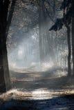 Eenzame wandelwagen Stock Afbeelding