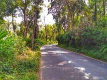 Eenzame weg stock afbeelding