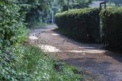 Eenzame weg met hoge hagen in de stad in Duitsland stock foto