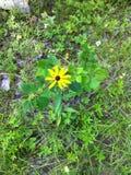 Eenzame wildflower Royalty-vrije Stock Foto's