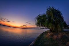 Eenzame wilg dichtbij het meer bij zonsondergang royalty-vrije stock foto's