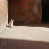 Eenzame witte kat Royalty-vrije Stock Foto