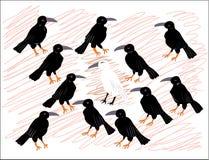 Eenzame witte kraai onder zwarte raven Stock Afbeelding