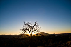 Eenzame woestijnboom bij zonsondergang Royalty-vrije Stock Fotografie