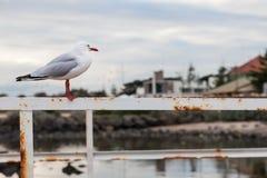 Eenzame zeemeeuw op een omheining Stock Foto