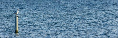 Eenzame zeemeeuw op het overzees royalty-vrije stock foto's