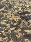 Eenzame zeester in het zand Stock Foto