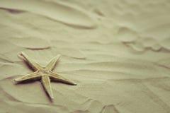 Eenzame zeester op een strandzand Royalty-vrije Stock Afbeeldingen