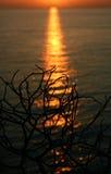 Eenzame zonsondergang royalty-vrije stock foto