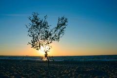 Eenzame zonsondergangboom #2 Stock Foto's
