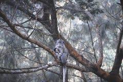 Eerbied voor dieren royalty-vrije stock fotografie