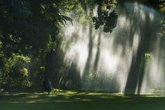 Eerie atmosphere through irrigation Royalty Free Stock Photo
