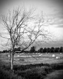Eerie Dead Tree in Black and White. Black and white soft focus image of an eerie, dead, leafless tree in a farmer's field with hay bales wrapped in white plastic royalty free stock photography
