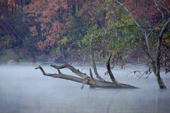 Eerie fog Stock Photo