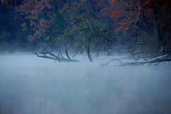 Eerie fog. And fallen trees at the lake stock photo