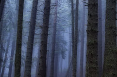 Eerie forest Stock Image