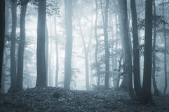 Eerie forest with fog and light. Eerie dark forest with fog and light in the evening royalty free stock photos