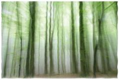 Eerie ghost forest. An eerie representation of a forest with wavy borders stock image