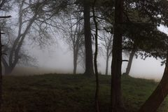 The eerie hill in the forest is in the fog. At morning royalty free stock images