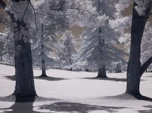 Eerie infrared image, golf course stock photo
