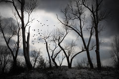 An eerie night. Shilloueted trees with storm clouds in the distance as a flock of birds fly through the sky Stock Photos