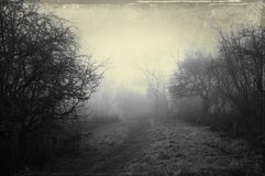 An eerie path on a foggy winters day, surrounded by trees. With a dark, spooky blurred abstract, grunge effect edit.  royalty free stock photos