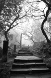 Eerie pathway Royalty Free Stock Photography