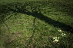 Eerie shadow of tree. On meadow stock illustration
