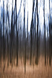 Eerie Trees. An abstract image of ghostly trees Royalty Free Stock Image