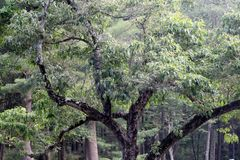 Eerie Trees Royalty Free Stock Photo