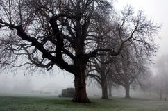 Eerie Trees of Winter in Diss Norfolk Park. A cold frosty and foggy winter day in Diss Mere Park in Norfolk East Anglia Norfolk England United Kingdom. The trees royalty free stock image