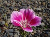 Eerlijk-goed-aan de lente Stock Fotografie
