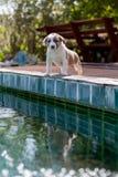 Eerlijke hond, kleine leuke puppyhond Royalty-vrije Stock Afbeeldingen