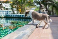 Eerlijke hond, kleine leuke puppyhond Stock Fotografie